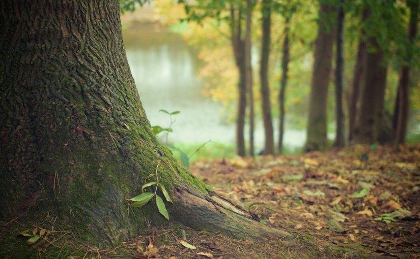 Ładny i {porządny ogród to nie lada wyzwanie, przede wszystkim jak jego konserwacją zajmujemy się sami.